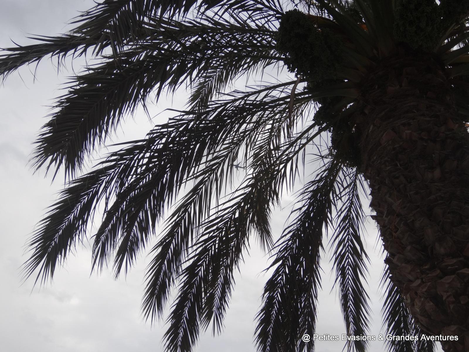Palmier vu d'en dessous