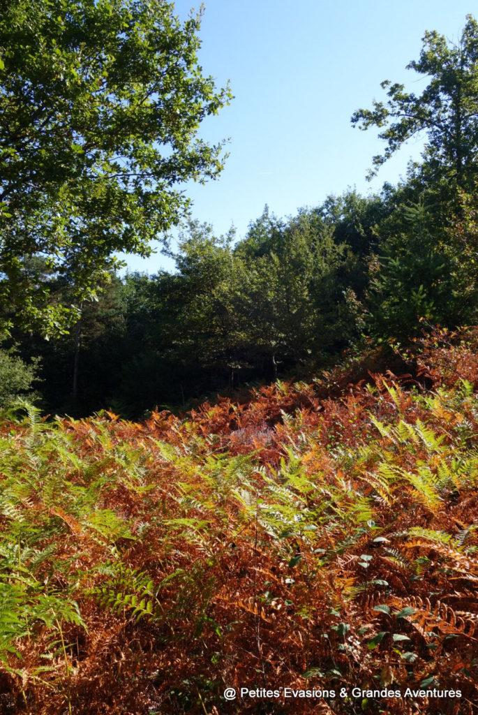 Fougères aux couleurs de l'automne