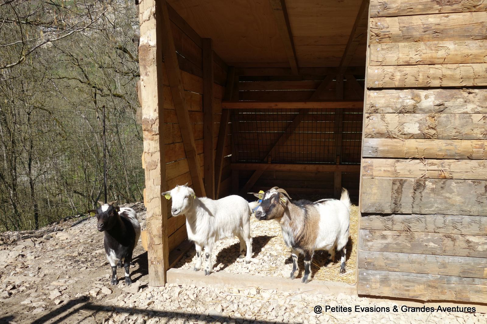 Chèvre - Trou de Bozouls