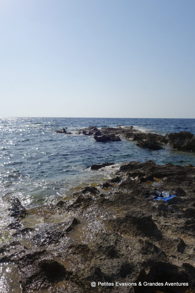 Coral Gardens (Dwejra - Gozo)