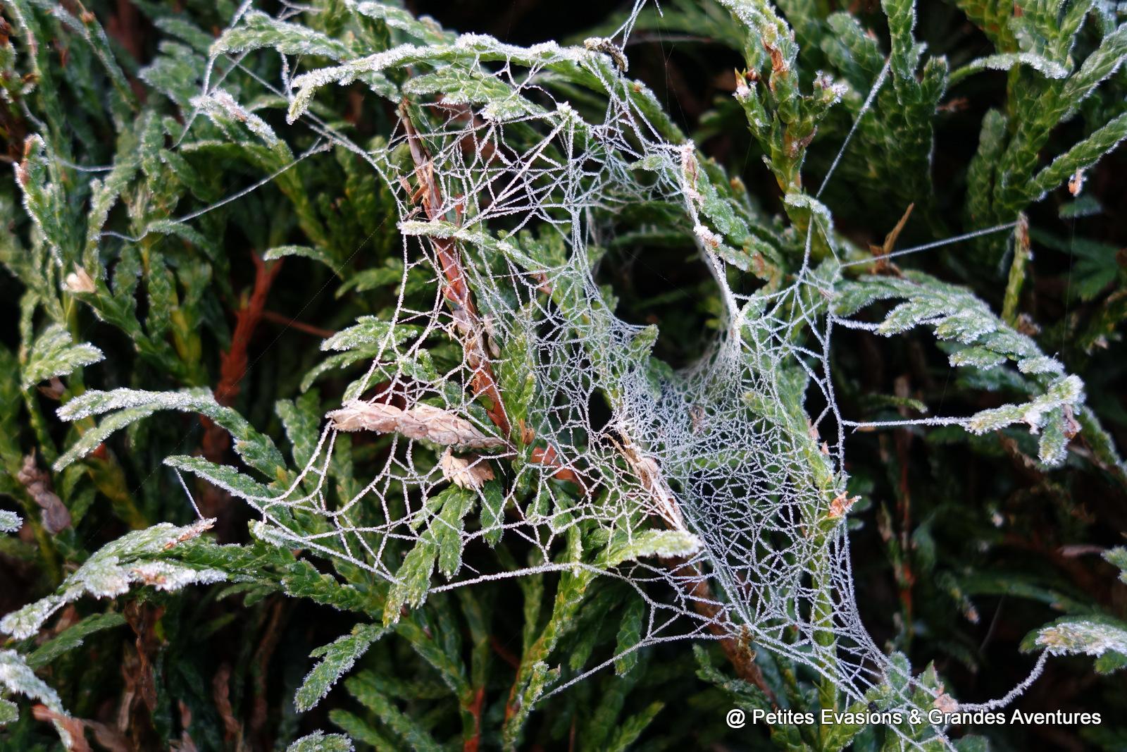 nature toile d'araignée givrée