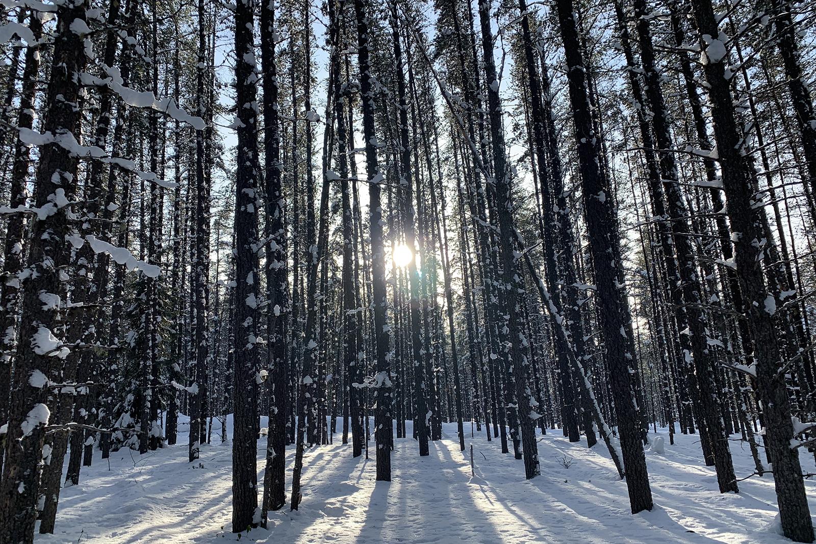 Abitibi-Témiscamingue Québec hiver