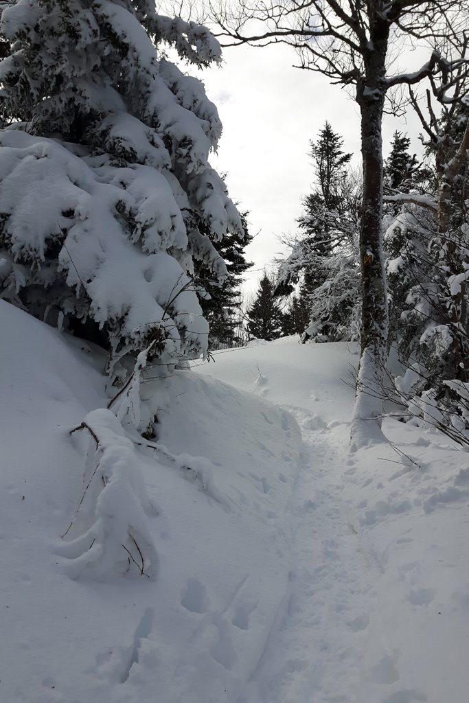 Sentier dans le Parc national du Mont Megantic Québec hiver